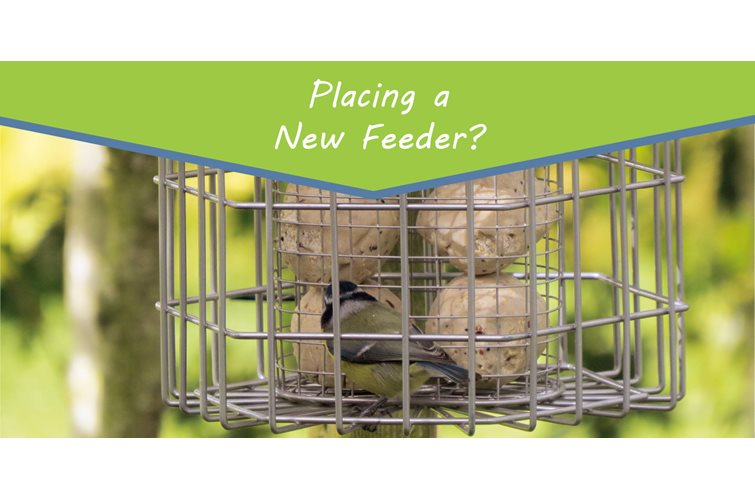 Placing a New Feeder