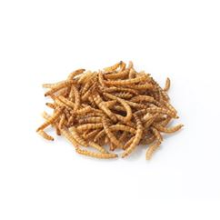 Dried Mealworms for Birds