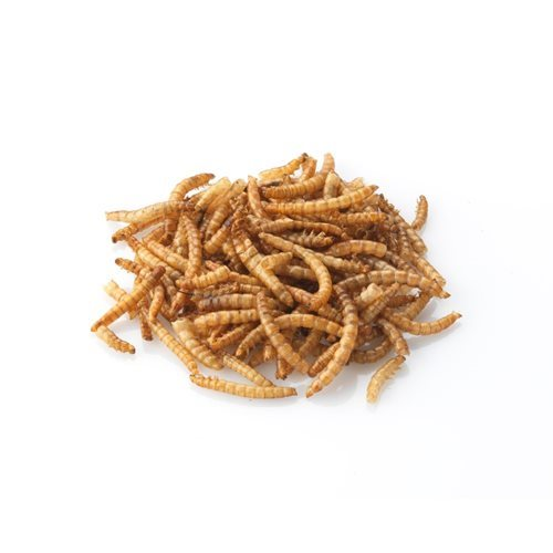 Brinvale Dried Mealworms for Birds