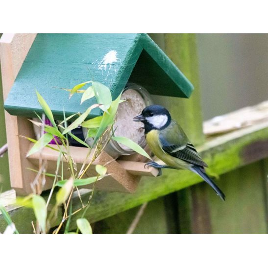 additional image for Dublin Peanut Butter Feeder and Guardian
