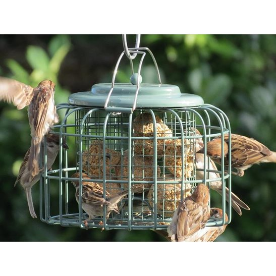 additional image for Original Suet Feeder - Nuttery